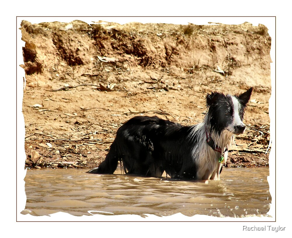 Wet Dog by Rachael Taylor