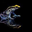 Dartfrog reflections on black by Angi Wallace