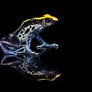 Dartfrog reflections on black by Angi Wallace