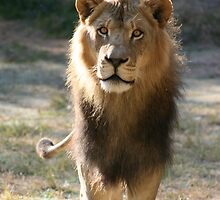 The King 2 by Darryle Ziegler