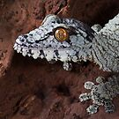 Giant leaf tailed gecko by Angi Wallace