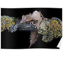 Satanic leaf tailed gecko Poster
