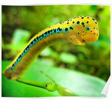 Curious Caterpillar Poster