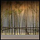 bamboo stage by dominiquelandau