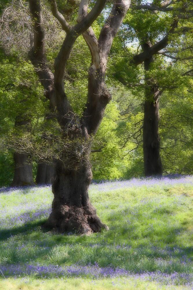 Dream Trees 1 by Alan Hawkins