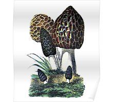 antique typographic vintage mushrooms toadstools Poster