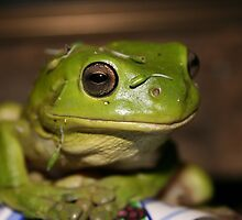 Green Tree Frog by andytan