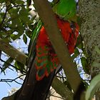 King Parrot 1 by Sybelle