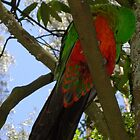 King Parrot 3 by Sybelle