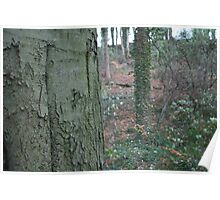 Tree Trunk with Forest Background Poster