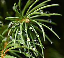 Droplets a plenty by Ben Shaw
