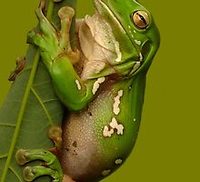 Hang in There Froggie by Gabrielle  Lees