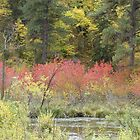 Spearfish Canyon (The Black Hills of South Dakota) in the fall by eltotton