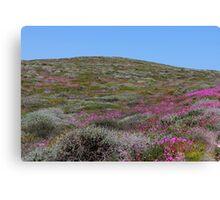 pink hills Canvas Print