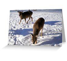2 deers Greeting Card