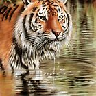 Tiger in Water by Danguole Serstinskaja