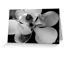 magnolia in bw Greeting Card