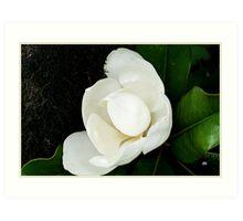 magnolia in color Art Print