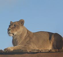 On the Lookout by Deborah  Bowness