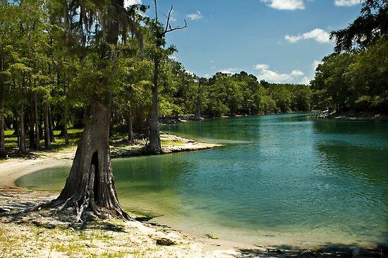 River Beach, Santa Fe River, north Florida by Stacey Lynn Payne