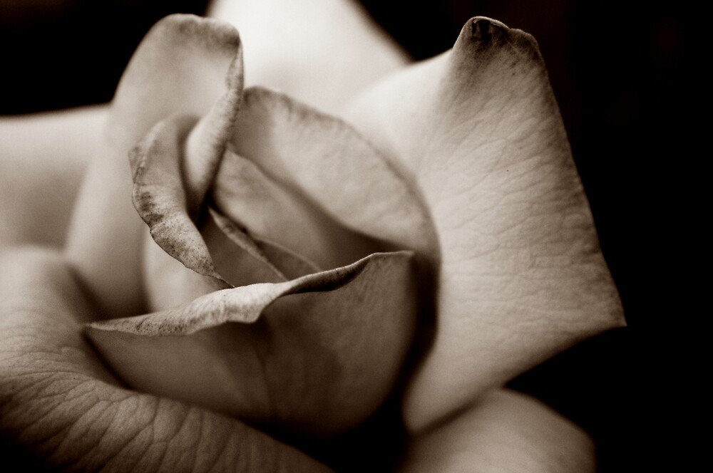 A Rose For You (To all the RedBubblers) by Trish Mistric