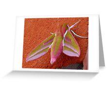 Elephant Hawk Moth Greeting Card