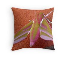 Elephant Hawk Moth Throw Pillow