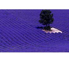 Lavender Fields of Provence Photographic Print
