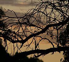 dusk by britt williams