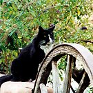 Cat and Wheel by fourthwall