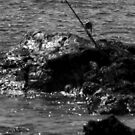 Fishing Pole by fourthwall