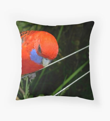 Sliding down the wire Throw Pillow