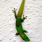 Gecko by fourthwall