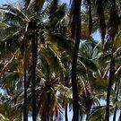 Palm Tree Kaleidoscope by fourthwall