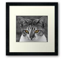 Cats eyes Framed Print
