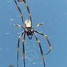 spider by ewald schober