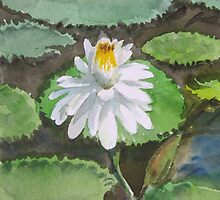 Lotus in watercolour by suresh pethe