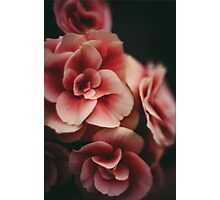 Dream in Pink Photographic Print