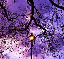 Tree Light by Joanna Jeffrees