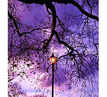 Tree Light Photographic Print