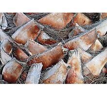 Palm stumps Photographic Print