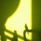 Bird Shadow by jalexanderart