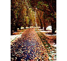 All Seasons Pathway Photographic Print