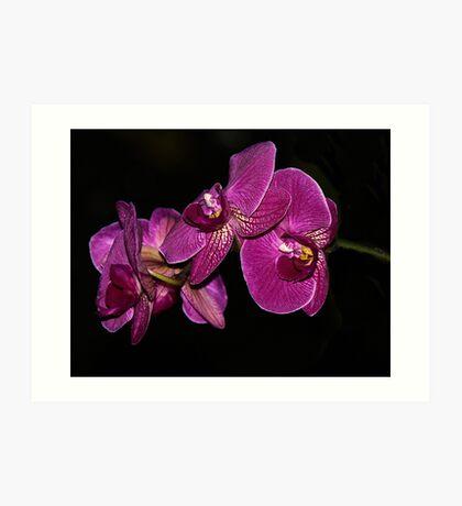 Purple side of darkness Art Print
