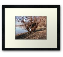 Bearen willow Framed Print