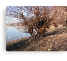 Bearen willow Canvas Print