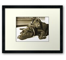 It's a tough life Framed Print