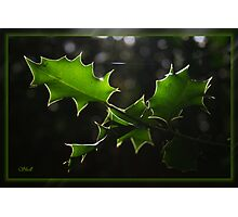 Holly Silhouette Photographic Print