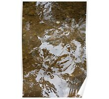 Reflected Leaves Poster