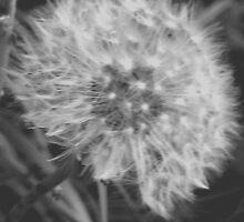 Dandelion Clock by joconti